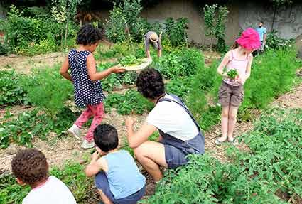 Récolte des herbes aromatiques au jardin du collège Mendès France Paris 20 avec l'association ViniVerdi et Aneth et Ciboulette, atelier taboulé 2018